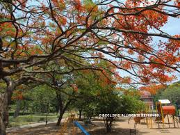 Small Picture Bengalurus MN Krishna Rao Park Designed in 1940s exclusively