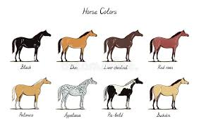 Foal Color Chart Horse Color Chart Set Equine Coat Colors With Text Types