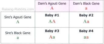 Hair Color Genetics Chart