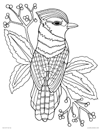 Coloring Pages Ideas Lmj Coloring Page Bluejay Pages Freeintable