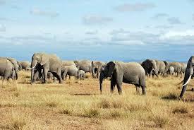 photo essay wildlife amboseli national park travel 4 8