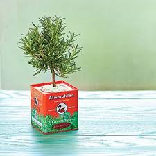 5 Indoor Plants That Make Perfect Gifts  Interior GardensChristmas Gift Plants