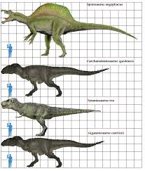carcharodontosaurus size image theropoda scale png prehistoric wiki fandom powered by wikia
