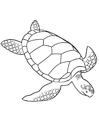 Small Picture Turtles Coloring Pages For Adults Printable Kids Colouring Pages