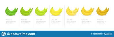 Banana Ripeness Stages Infographics Chart Bunch Of Bananas