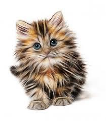 cat doodle 3d for wallpaper