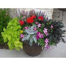 Small Picture 2198 best Containers images on Pinterest Garden container Pots