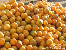 Nicaraguan Fruits Nicaragua Vianica Com