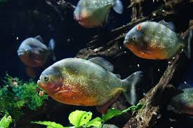 Fish Names Beginning With B