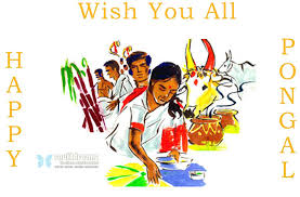 wish you a happy pongal a festival
