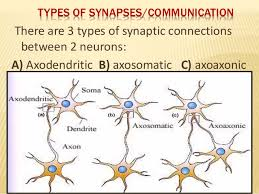 Neuron Its Structural Functional Type By Murtaza Syed