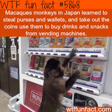 Fun Facts About Vending Machines Cool Monkey In Japan Learned To Steal Wallets And Use The Vending Machine
