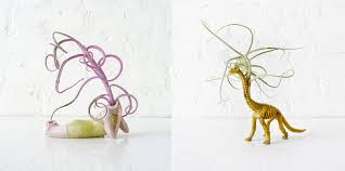 Air Plant Display New Ways To House Air Plants Cool Hunting