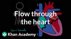 Flow Through The Heart Video Khan Academy