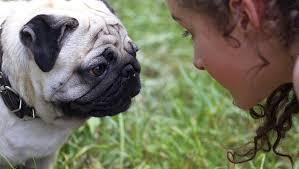 perros se comunican