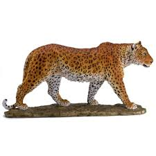 african wildlife spotted leopard