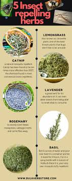 5 Insect Repelling Herbs