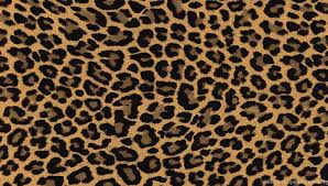 cheetah print background for twitter