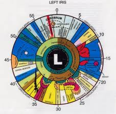 What Is Left Eye Iridology Chart Iriscope Iridology
