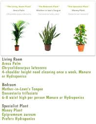 indoor plants names and pictures name of house green