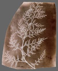 william henry fox talbot  and the invention of  heilbrunn timeline of art history
