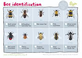 52 Rigorous Pond Microorganisms Identification Chart