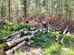 Экологические проблемы России и какие существуют пути их решения Вырубка лесов