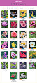 Month Flowers Chart What Flowers Are In Season Ftd Com