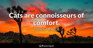 Comfort Quotes Extraordinary Comfort Quotes BrainyQuote