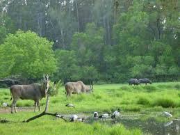 Ο ρόλος του δάσους στη διατήρηση του φυσικού περιβάλλοντος - Πρόσκοποι  Αθήνας
