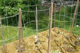 Diy tomato cage Vegetable Garden 13diytomatocages Homestead Survival 18 Diy Tomato Cages For Your Garden