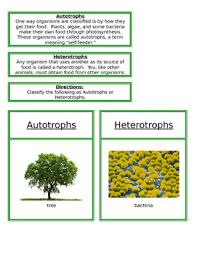 Heterotrophs And Autotrophs By Montessori Garden Tpt