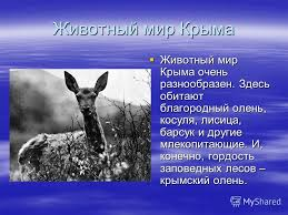 Презентация на тему Природа моего родного края Крыма Выполнили  5 Животный