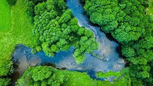 Bory Tucholskie: atrakcje, jeziora, park narodowy. Przewodnik po Borach  Tucholskich - Radio ZET