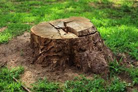 Removing Small Tree Stumps (Page 1) - Line.17QQ.com