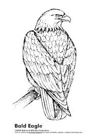 Bald Eagle Coloring Sheet Printable Bald Eagle Coloring Pages For