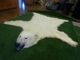 polar bear rug legal with paperwork taxidermy mount for real head fake faux polar bear rug