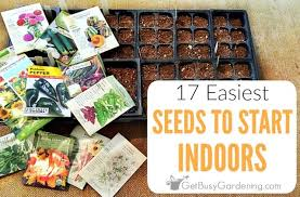17 easiest seeds to start indoors get