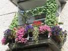 Оформление балконов цветов 173