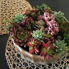 117 Best Succulent Ideas Images On Pinterest  Succulent Gardening Succulent Container Garden Plans