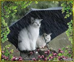 """Résultat de recherche d'images pour """"gifs animé chat"""""""