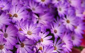 Purple Flowers Backgrounds Purple Flower Wallpapers Top Free Purple Flower