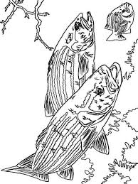 Small Picture Bass fish coloring pages Download and print Bass fish coloring pages