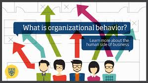 What Is Organizational Behavior What Is Organizational Behavior Learn More About The Human