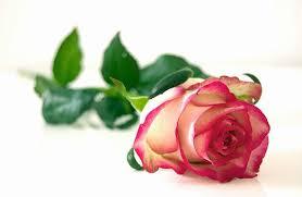 Znalezione obrazy dla zapytania piękna róża rysunek