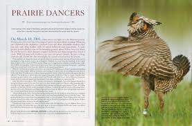 "prairie dances of grassland grouse national wildlife magazine  i am excited to see my photo essay ""prairie dances of grassland grouse"" in the national wildlife magazine 2013 issue"