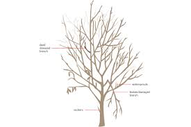 Successful Fruit Tree Pruning  Stark Brou0027sHow To Graph A Fruit Tree
