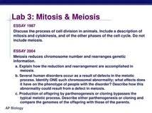 mitosis essay causes of the american civil war essay college this sample essay on importance of mitosis in living organisms and gather crucial guidelines on how to write a similar sample fine