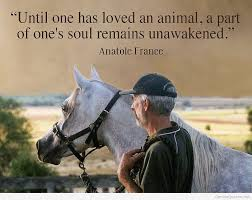 Love Animals Quotes Simple Best Animals Quotes On HD Images
