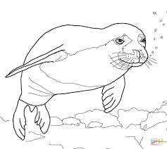 Elephant Seal clipart coloring page - Pencil and in color elephant ...